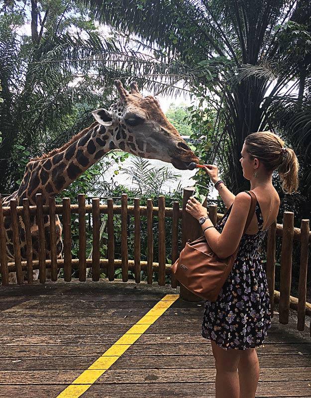 Dando da mangiare a una giraffa a Singapore