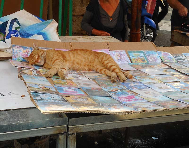 Gatto al mercato di Ballarò