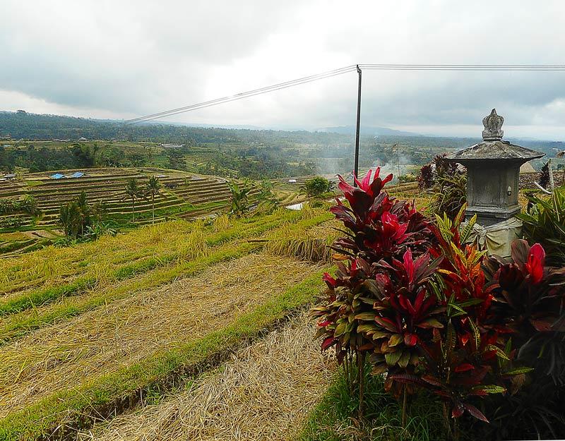 Le risaie di Jatiluwih, patrimonio Unesco