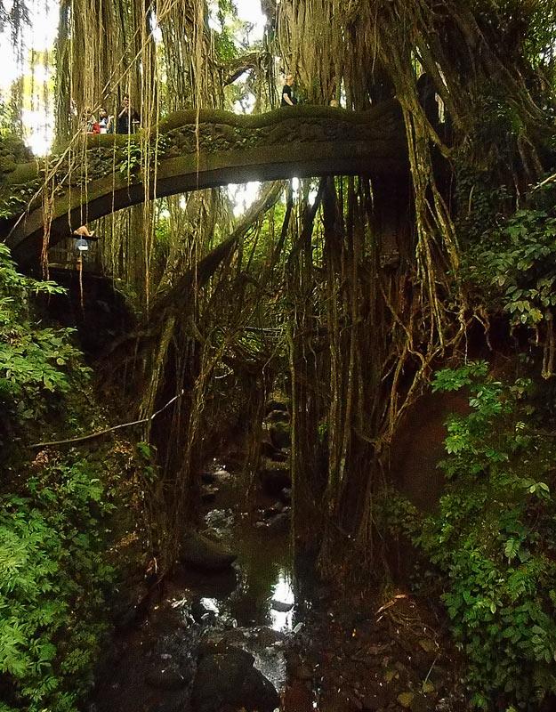 Sacred Monkey Forest a Ubud