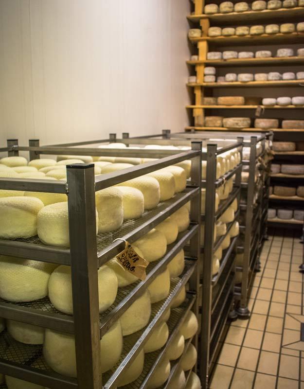 Il formaggio di Podere Paterno