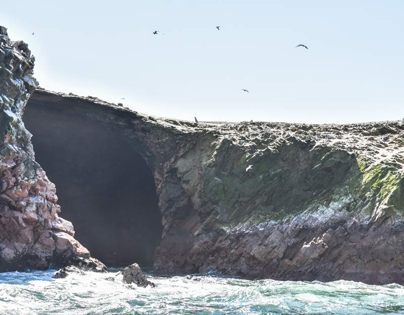 Pinguino di Humboldt alle Isole Ballestas