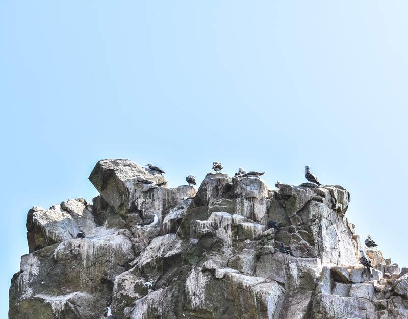 Uccelli e guano alle isole Ballestas