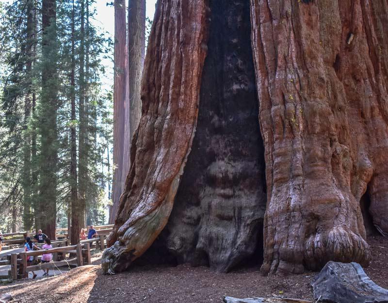 La base della sequoia del Generale Sherman