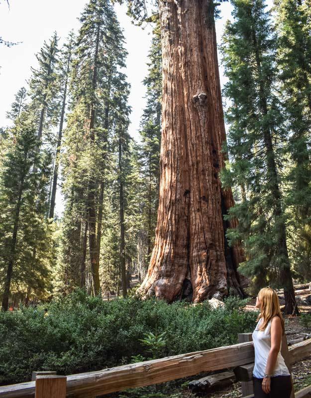 Il Generale Sherman nel parco nazionale di Sequoia