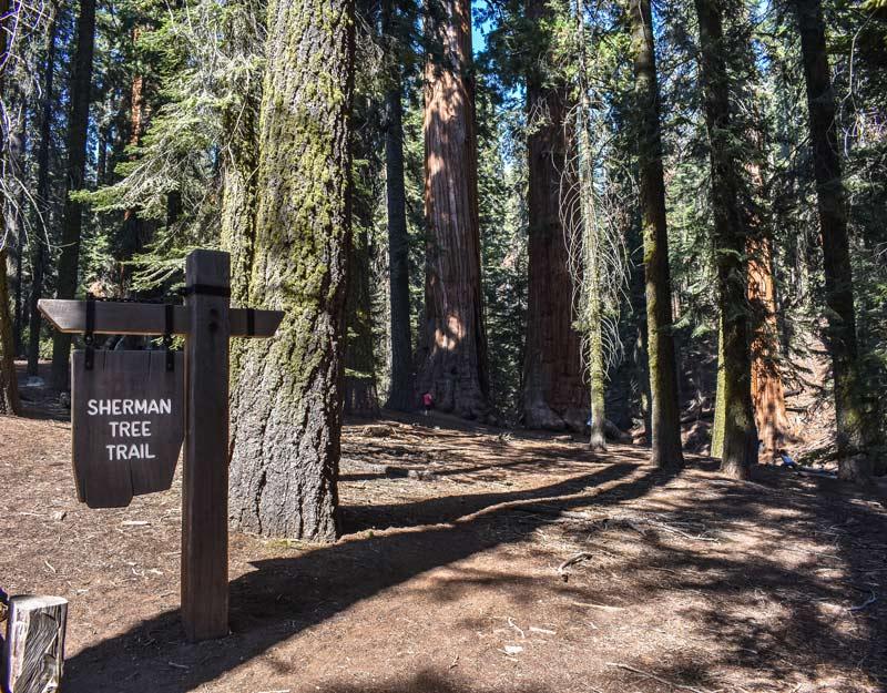 Sherman Tree Trail nel parco nazionale di Sequoia