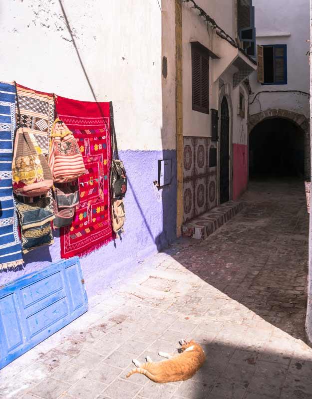 Essaouira in giornata: gatto nella Medina