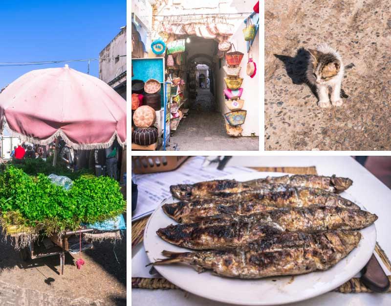Visitare Essaouira in un giorno