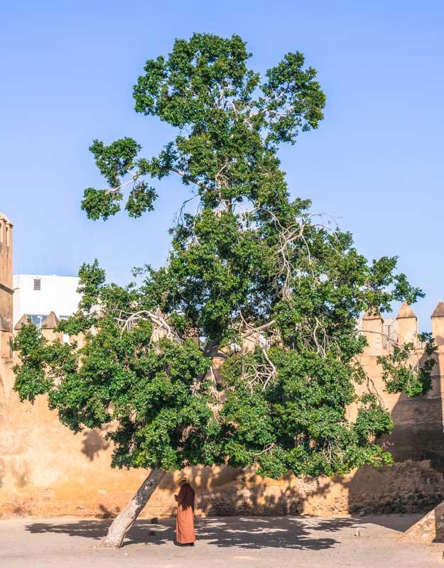 Immagini dal Marocco