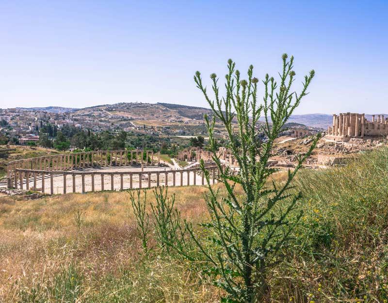 Jerash dall'alto