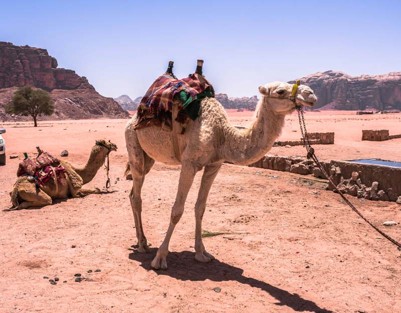 Incontri nel Wadi Rum